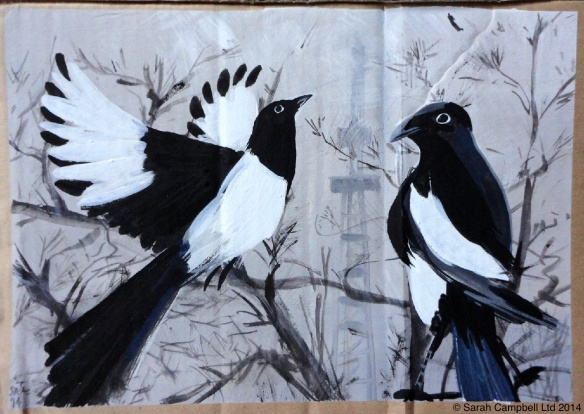 magpies