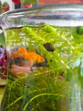 goldfish bowl